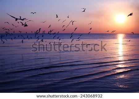 flying bird ,Thailand - stock photo