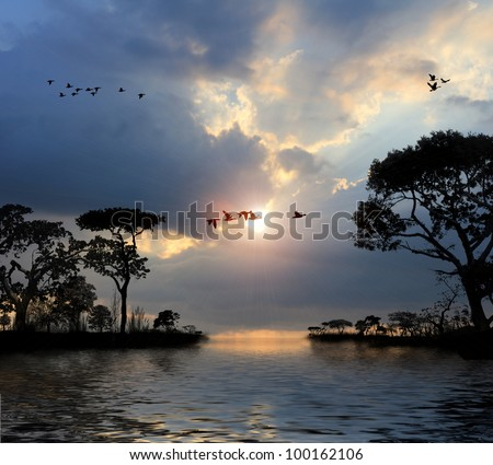 Flying birds in the sky, lakes, trees, sunset - stock photo