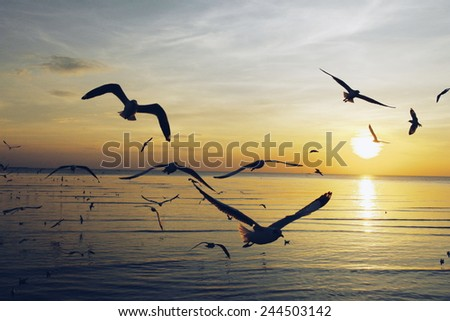 flying birds on sunset - stock photo