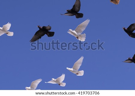 Flying black and white doves on a blue sky background - stock photo
