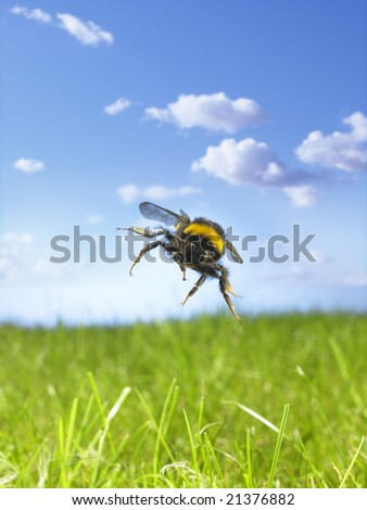 Flying bumble bee - stock photo