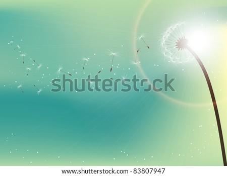 Flying dandelion seeds in direct sunlight - stock photo