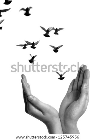 flying dove with open hand isolated on white freedom concept black and white background - stock photo