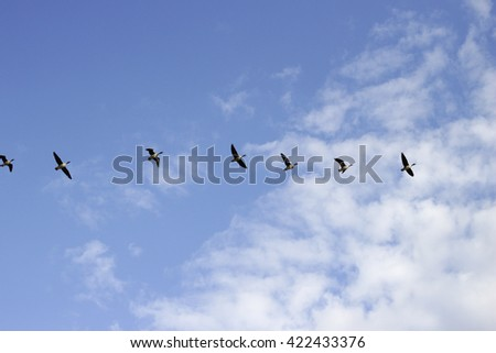 flying geese blue sky, low clouds