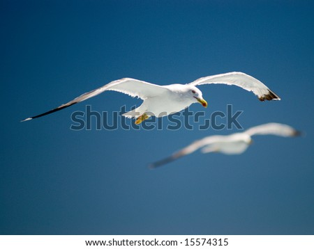 flying gull - stock photo