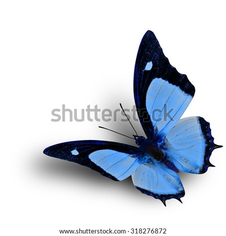 Flying Indian Nawab butterfly in fancy blue color profile on white background with soft shadow beneath - stock photo