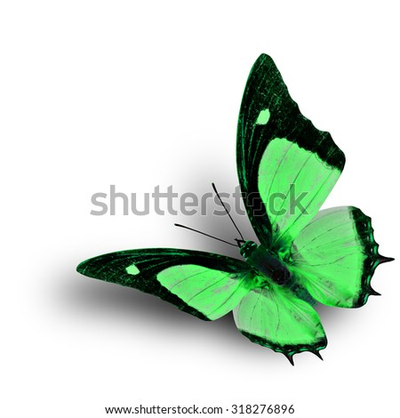Flying Indian Nawab butterfly in fancy green color profile on white background with soft shadow beneath - stock photo
