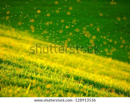 flying insect over the field - stock photo