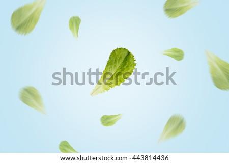 Flying lettuce leaves on blue background. Focus on central leaf - stock photo
