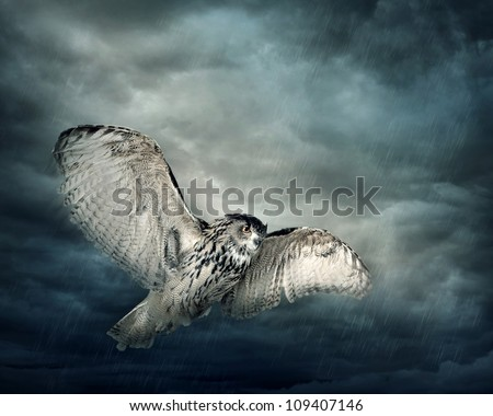 Flying owl bird at night - stock photo