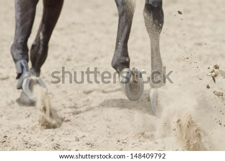 Flying sand under the hooves of the horses. - stock photo