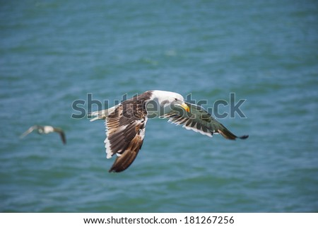 Flying Seagull Above the Ocean - stock photo