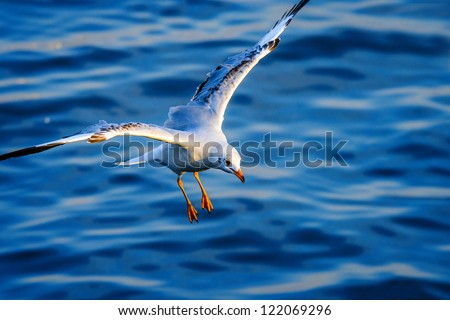 flying seagull in action - stock photo