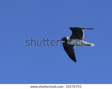Flying seagull on sky background - stock photo