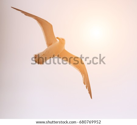 Flying seagull over blue sky with sunlight.