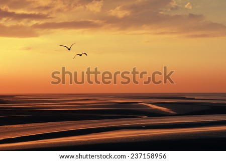 flying seagull silhouettes over the bay at dusk - stock photo