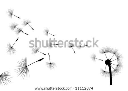 Flying seeds on white background - stock photo