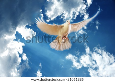 flying white dove on blue sky background - stock photo