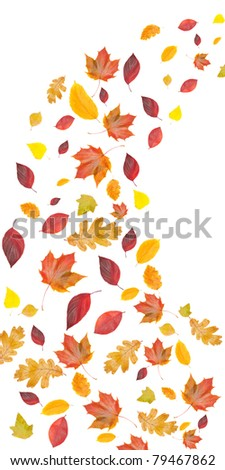 flying yellow and red leaves, isolated on white background - stock photo