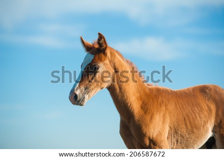 foal against the skies - stock photo