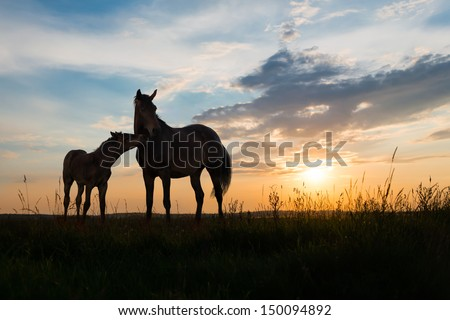 foal and mare - two horses at sunset - stock photo
