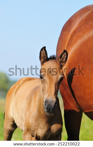 foal few days old - stock photo