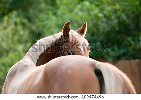 foal looking back - stock photo
