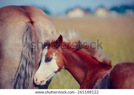 Foal on a meadow. The horse is grazed. Horse on a pasture.  - stock photo