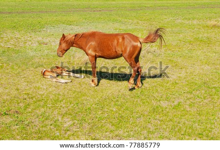 foal with mare on a green field - stock photo