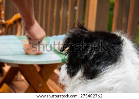 Focus is on the dog who can be seen from behind, coveting the snacks on the table that are right at nose level - stock photo