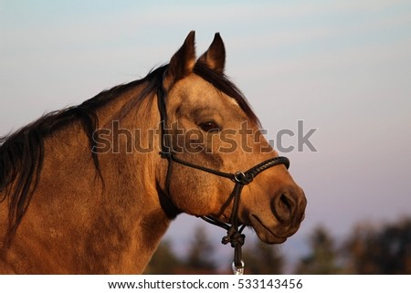Focus of this photograph is on the eye of a bridled, brown horse with a black mane giving it a humble look