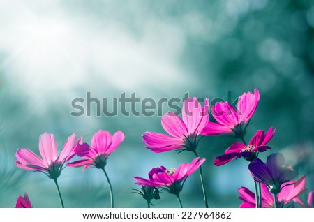 Focus on the back of the flower universe. With the morning light - stock photo