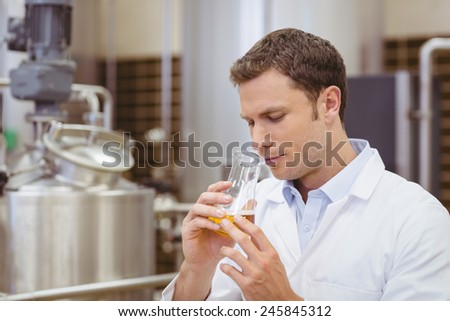Focused brewer smelling beaker with beer in the factory - stock photo