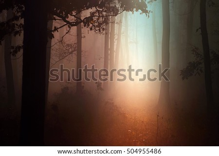 Fog and sun in the autumn forest