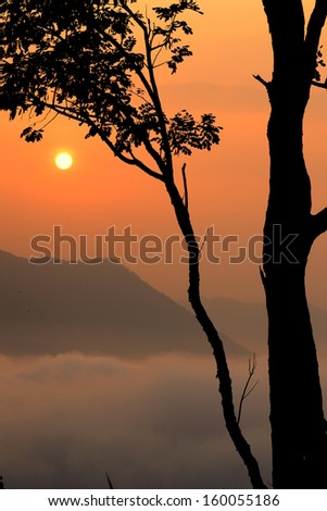 Fog and sunrise on the top  of Phutog Moutain,Chiang Khan,Thailand.
