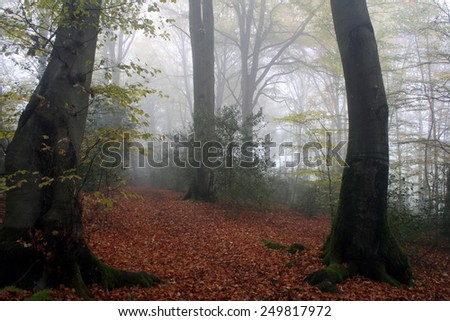 fog forest - stock photo
