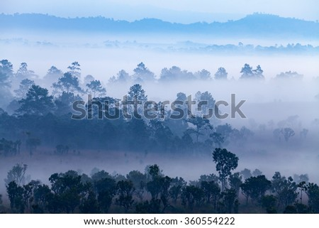 Fog in forest at Thung Salang Luang National Park Phetchabun,Thailand