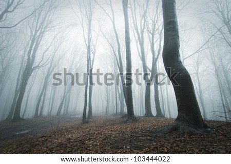 fog in forest with black trees - stock photo