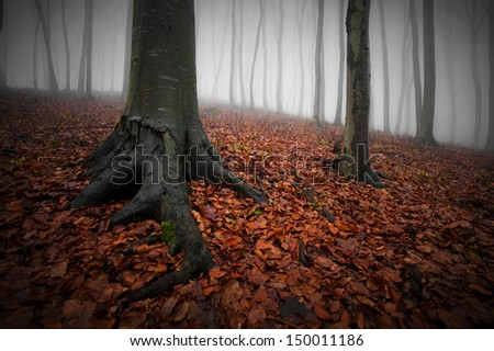 fog in forest with leaf covered ground - stock photo