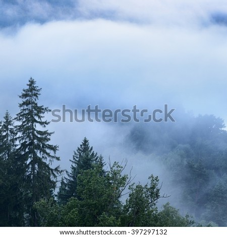 Fog in Gauja river valley at dawn