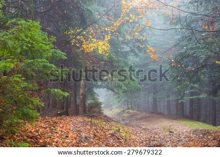 Fog in rainy forest, autumn landscape - stock photo