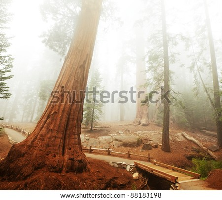 fog in Sequoia National Park in USA - stock photo
