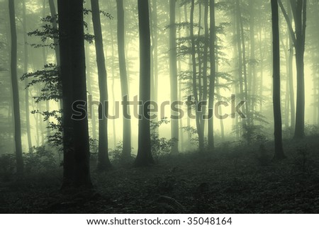 Fog in the forest with trees in counter light - stock photo