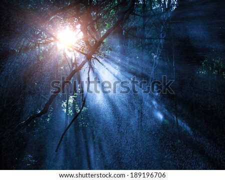 Fog in the mysterious rainforest, sun rays are shining through high dark trees, tropical woods, dangerous travel concept - stock photo