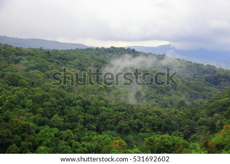 Fog on nature forest