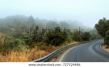 Fog on the road