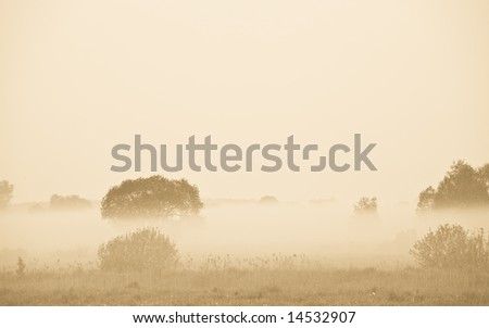 Fog over trees and meadow. Early in the morning scene. Sepia tone. - stock photo