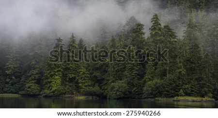 Fog over trees, Skeena-Queen Charlotte Regional District, Haida Gwaii, Graham Island, British Columbia, Canada - stock photo