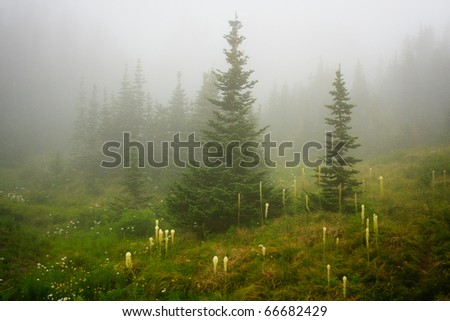 Fog sets in among beargrass and forest along Going to the Sun Road, Glacier National Park - stock photo