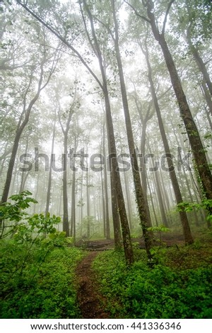 Fog upon the Appalachian Trail in Spring Appalachian Trail, Appalachian Mountains, Georgia  - stock photo